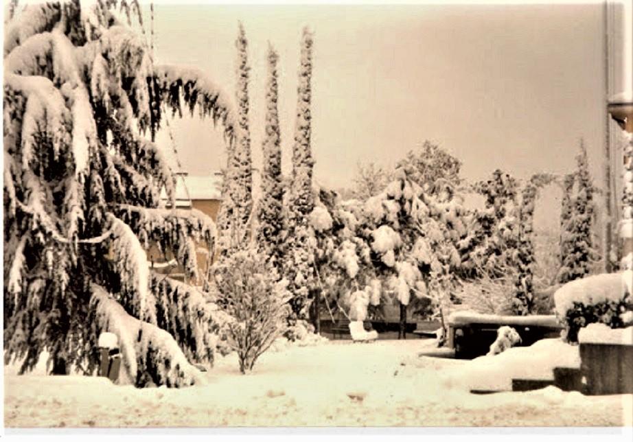 La grande nevicata del 1985 Foto di un altro giardino, ma anche il nostro era più o meno così.
