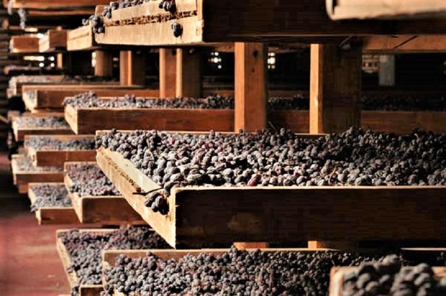 Amarone, le cantine e ville Palladiane Un vino le cui uve necessitano di un periodo di passimento, le stesse vengono poste su dei graticci.