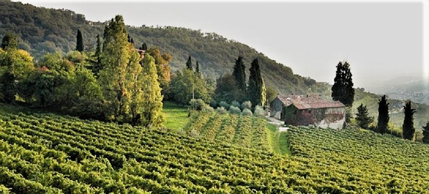 """Amarone, le cantine e ville Palladiane Alla fine del XVIII secolo la famiglia Boscaini acquistò in Valpolicella la piccola valle chiamata """"Vaio dei Masi"""", che diede il nome all'azienda di cui i Boscaini sono tuttora proprietari."""