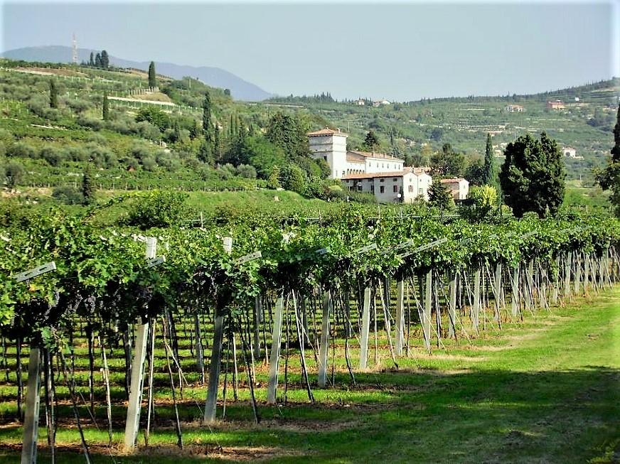 Amarone, le cantine e ville Palladiane Michele Castellani, ne ricordo il Ca' del Pipa per quello che era in assoluto il mio produttore preferito.